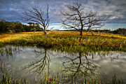 Swamps Prints - Salty Marsh at Jekyll Island Print by Debra and Dave Vanderlaan