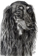 Saluki Framed Prints - Saluki in Graphite Framed Print by Michelle Wrighton