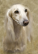 Beautiful Eyes Posters - Saluki Poster by Rebecca Cozart