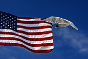 Flying Seagull Art - Salute The Flag by Tim Wilson
