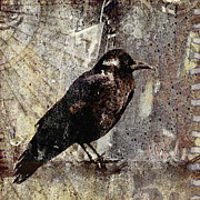 Crow Collage Prints - Same Crow Different Day Print by Carol Leigh