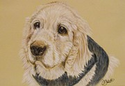 White Pastels Metal Prints - Sammy The Cocker Spaniel Metal Print by Debra Stanton