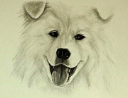 Tanya Arends - Samoyed Smile