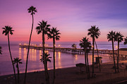 Palm Trees Art - San Clemente Sunset Meditation by Scott Campbell