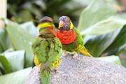 San Diego Zoo - 1212341 Print by DC Photographer