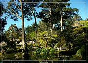 Robert Plant Print Art - San Francisco Golden Gate Park Japanese Tea Garden 11 by Robert Santuci