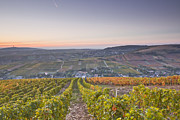 Julian Elliott - Sancerre vineyards