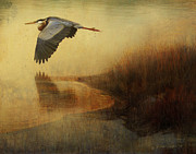 R christopher Vest - Sand Bar Heron- Colorado...