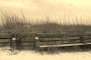 Coastal Prints - Sand Bench in Sepia Print by Cathy Lindsey