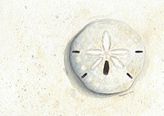 Dollar Paintings - Sand Dollar by Amanda Makepeace