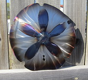 Nautical Sculpture Posters - Sand Dollar Poster by Robert Blackwell