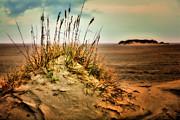 Sea Oats Digital Art Prints - Sand Dune on Ocracoke - Outer Banks I Print by Dan Carmichael