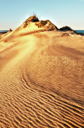 Sea Oats Prints - Sand Dune Textures - Outer Banks I Print by Dan Carmichael