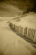 Sand Dunes Posters - Sand Dunes and Fence Poster by Timothy Johnson