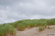 Jeff Goulden - Sand Dunes and Grass