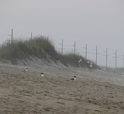 Sand Dunes Photos - Sand Dunes and Sea Gulls by Cathy Lindsey
