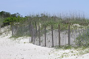 Sand Fences Posters - Sand Fence at Cape Lookout Poster by Cathy Lindsey