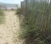 Sand Fences Art - Sand Fence by Cathy Lindsey