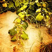 Frank Winters - Sand Grass