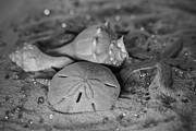 Tammy Chesney - Sand Shells and Gem...
