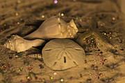 Tammy Chesney - Sand Shells and Gems