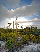 Florida Gifts Framed Prints - Sandhill and Clouds II. Lake Lizzie Preserve. Framed Print by Chris  Kusik