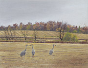 Field Pastels Prints - Sandhill Cranes Feeding in Field  Print by Jymme Golden