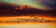 Bill Kesler Posters - Sandhill Cranes Take The Sunset Flight Poster by Bill Kesler
