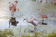 Cranes Prints - Sandhill Excursion Print by Carol Groenen