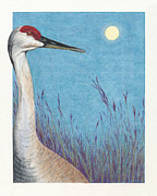 Wildlife Landscape Drawings - Sandhill Moonrise at Crex Meadows by Jymme Golden
