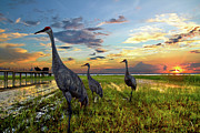 Cranes Framed Prints - Sandhill Sunset Framed Print by Debra and Dave Vanderlaan