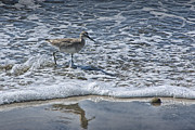 Randall Nyhof - Sandpiper at the edge of the water at the beach at Torrey Pines State Beach