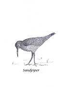 Label Drawings Prints - Sandpiper Print by Myron Gilbert