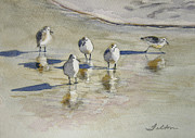 Water Reflections Paintings - Sandpipers 2 watercolor 5-13-12 julianne felton by Julianne Felton