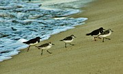 Craig Wood - Sandpipers All in a Row