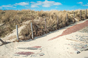 Land Scape Prints - Sandy Dunes in Holland Print by Jenny Rainbow