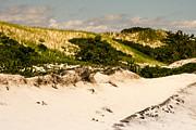 Frank Winters - Sandy Neck Dunes July 2014