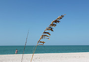 Carol McCutcheon - Sanibel Sea Oats