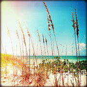 Sea Oats Prints - Sanibel Sea Oats Print by Chris Andruskiewicz