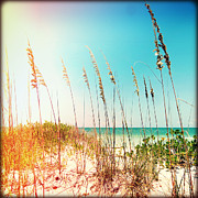 Sea Oats Prints - Sanibel Sea Oats I Lights Print by Chris Andruskiewicz