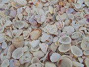 Bucko Productions Photography  - Sanibel Shells