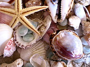 Beach Glass Posters - Sanibel Shells Poster by Colleen Kammerer