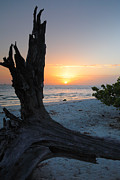 Driftwood Posters - Sanibel Sunrise II Poster by Steven Ainsworth
