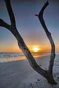 Snag Framed Prints - Sanibel Sunrise XIII Framed Print by Steven Ainsworth