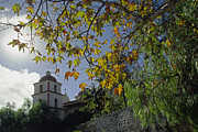 American Sycamore Prints - Santa Barbara Mission in Autumn Print by Craig Lovell