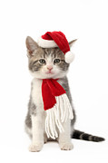 Cute Kitten Digital Art Posters - Santa Cat Poster by Greg Cuddiford