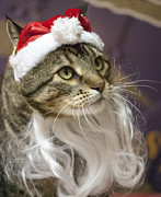 Domestic Animal Photos - Santa Cat by Juli Scalzi