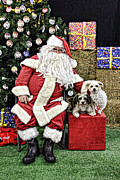 Santa Paws  Print by Helen Akerstrom Photography