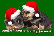 Puppies Digital Art - Santa Paws Is Coming To Town Christmas Greeting by Tracey Harrington-Simpson