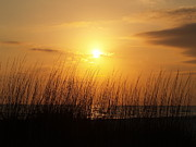 Wall Pictures Prints - Sarasota Sunsets Print by Athala Carole Bruckner